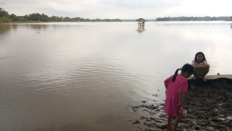Diguyur Hujan Deras, Tanaman Padi di Palas Terendam Banjir