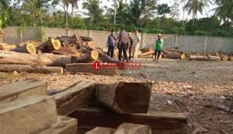 Dinas Kehutanan Ajak Warga Perangi <i>Illegal Logging</i>