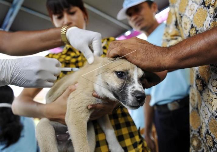 Dinas Perikanan dan Peternakan Lamtim Gencar Vaksinasi Anti-Rabies