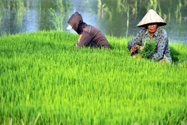Dinas Perkebunan Tingkatkan Mutu Hasil Perkebunan Lampung
