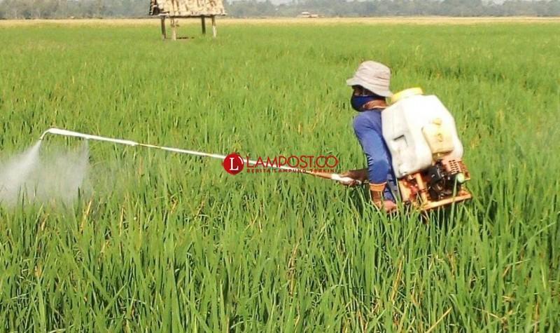 Dinas Pertanian Bersama Petani Gerakan Pengendalian Hama Wereng