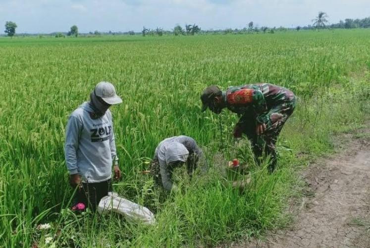 Dinas Pertanian Mesuji akan Data Sawah Terdampak Kekeringan