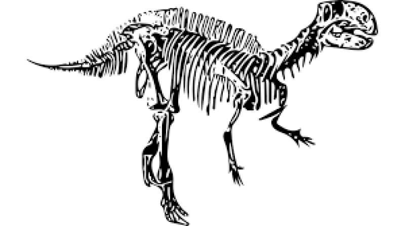 Dinosaurus Buas Terbesar