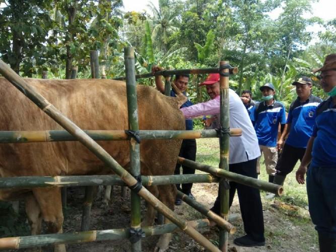 Disnakkeswan Lampung Selatan BerikanPelayanan Suntik dan Inseminasi Buatan