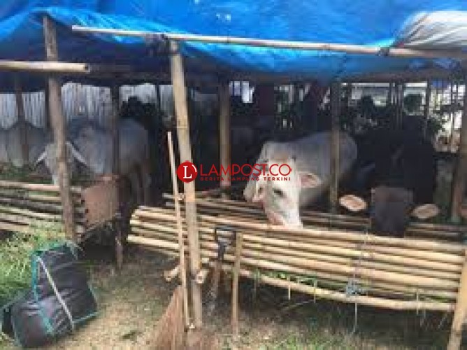 Distan Dorong Pengembangan Pasar Ternak di Lampura