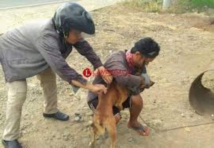 Distan Lampura Sweeping Anjing Liar di Desa SumberArum