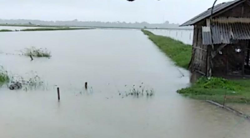 Diterjang Banjir, Petambak Udang di Ketapang Merugi Ratusan Juta
