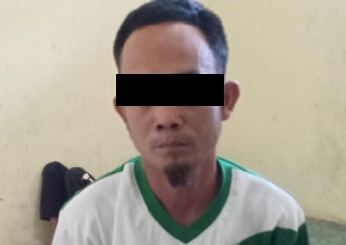 DPO Pencuri Buah Sawit PT AKG Ditangkap Polisi