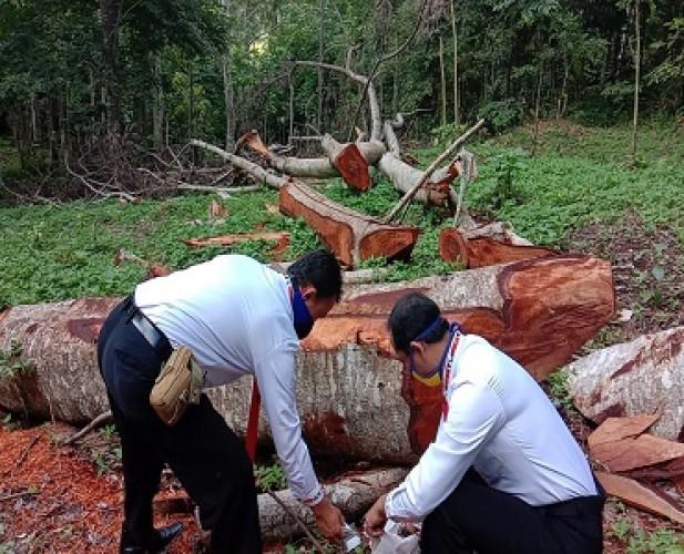 Dua Penebang Pohon di Taman Kehati Terancam Pidana
