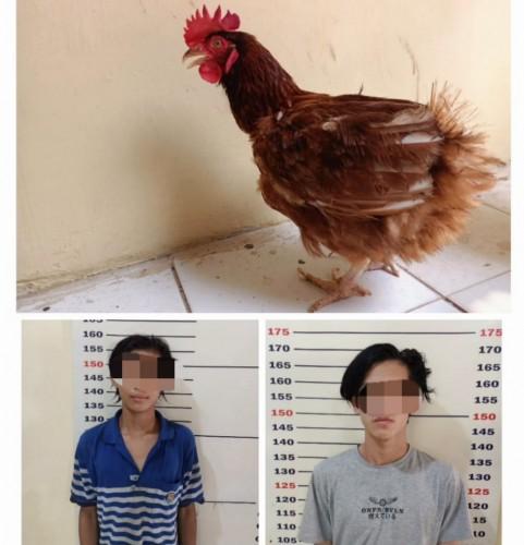 Dua Remaja Pencuri Ayam di Kalianda Dibekuk