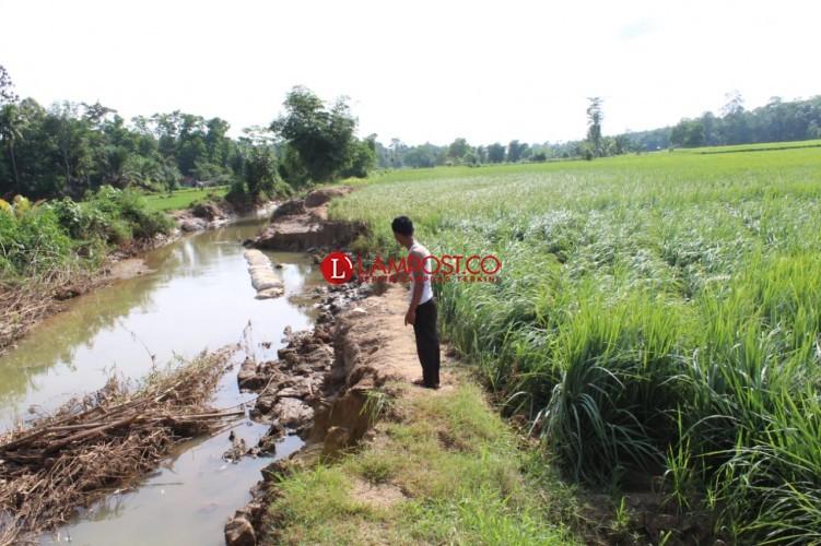 Dua Tanggul Sungai di Pekon Nusawungu Jebol Akibat Banjir