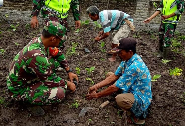 Dusun Pemanukan Dijadikan <i>Pilot Project</i> Pengembangan Tanaman Kelor