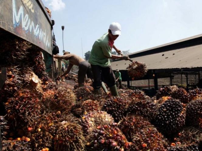 Ekspor Minyak Sawit Menggeliat di Awal Tahun