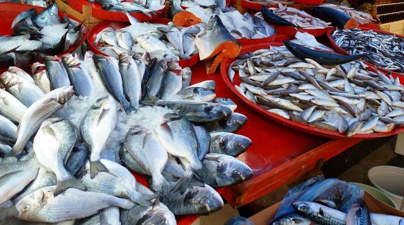 Ekspor Perikanan Lampung Triwulan I Naik 38,4 Persen