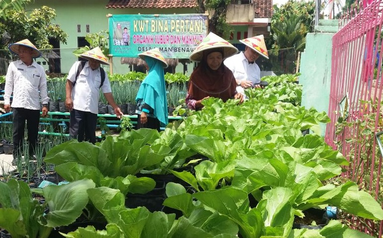 KWT Bina Pertani Perjuangkan Kampung Sayur Wisata Edukasi di Lamteng