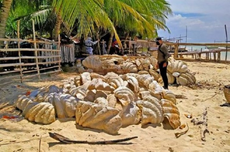 Filipina Sita Kulit Kerang Raksasa Senilai Rp363 Miliar