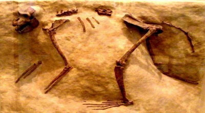 Fosil Monyet Terkecil