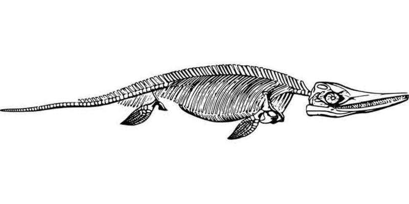 Fosil Reptil Ditemukan