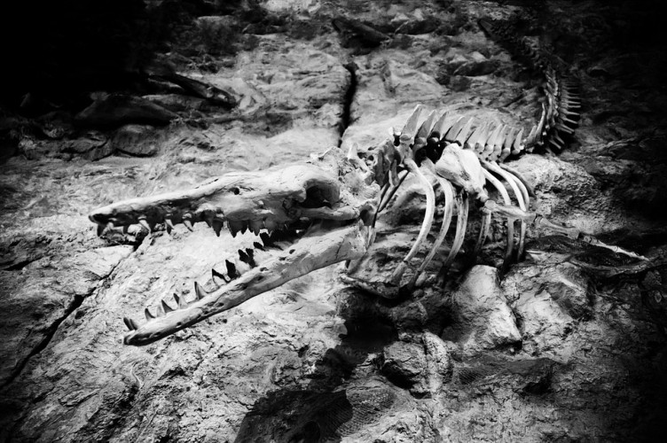 Fosil Tiranosaurus Terbesar