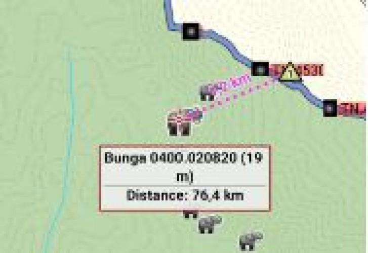 Gajah Dekati Perbatasan, Masyarakat Suoh Diimbau Waspada