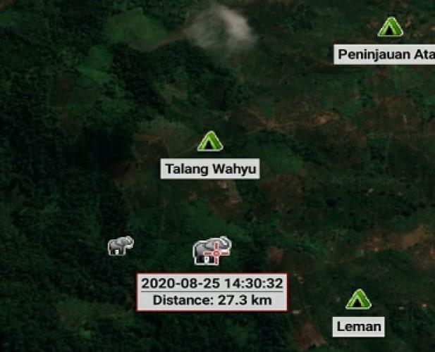 Gajah Liar Dekati Perbatasan, Warga di Kawasan TNBBS Diminta Mengungsi