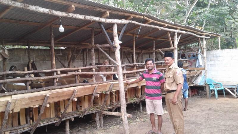 Geliat Usaha Jual Beli Kambing di Dusun Tegalsari