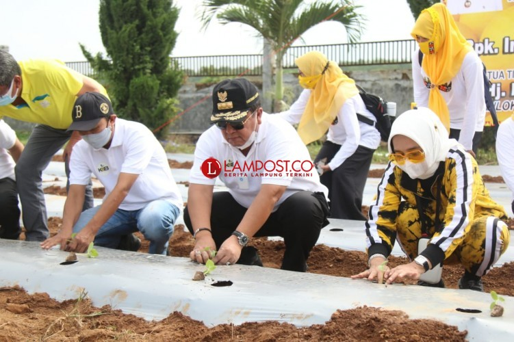 Gubernur Arinal Tanam Perdana Melon dan Semangka di Taman Agro Park