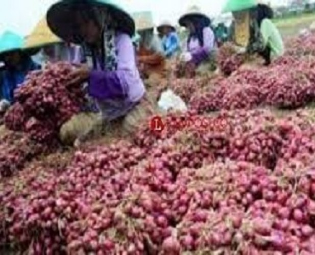 Harga Bawang Merah Diprediksi Normal pada Juni