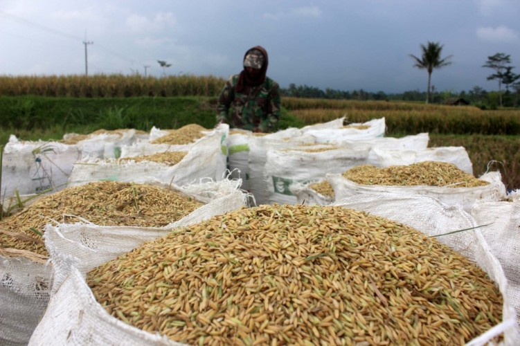 Harga Gabah di Tingkat Petani Turun 14,39 Persen