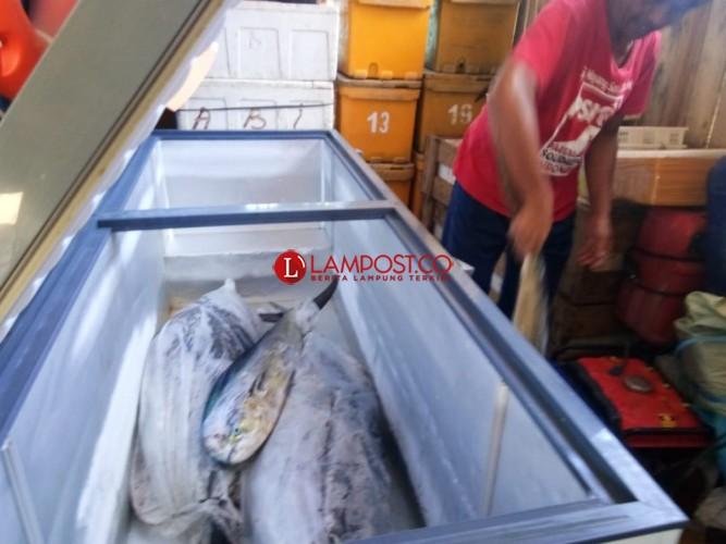 Harga Ikan di Pesisir Barat Cenderung Stabil