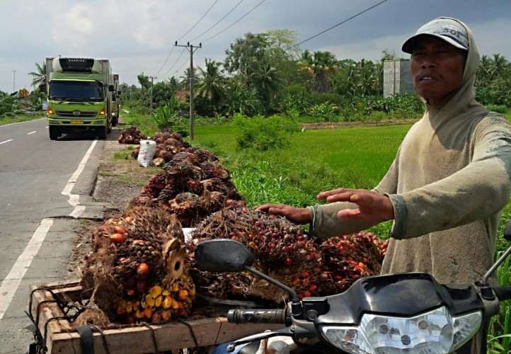 Harga TBS Sawit di Lampung Selatan Anjlok Rp800 per Kg