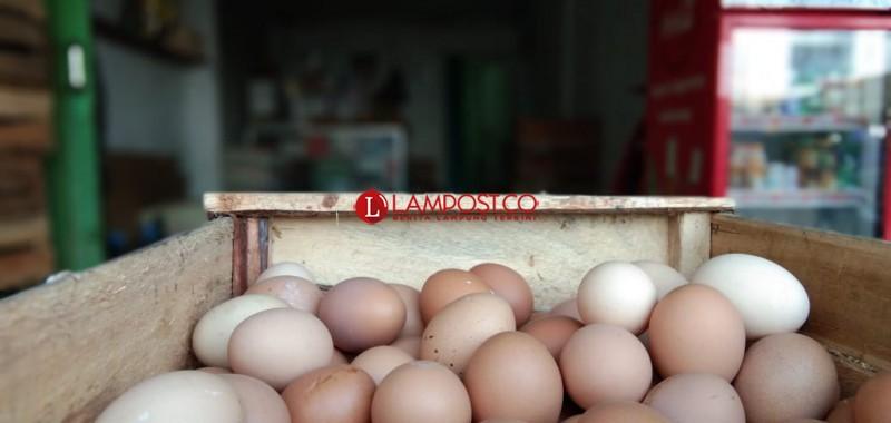 Harga Telur di Lamsel Turun Jadi Rp25 Ribu Per Kilo