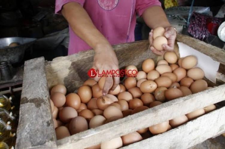 Harga Telur Meroket Jelang Natal