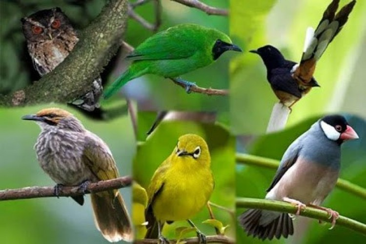 Hendak Jual 14 Burung Dilindungi, Hendra Diancam 5 Tahun Bui