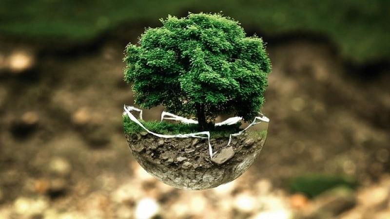 Hijaukan Bumi