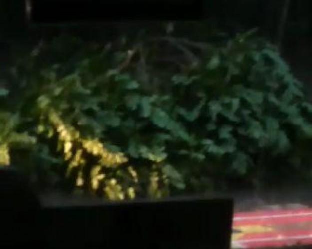 Hujan Angin Tumbangkan Pohon di Jalan Diponegoro