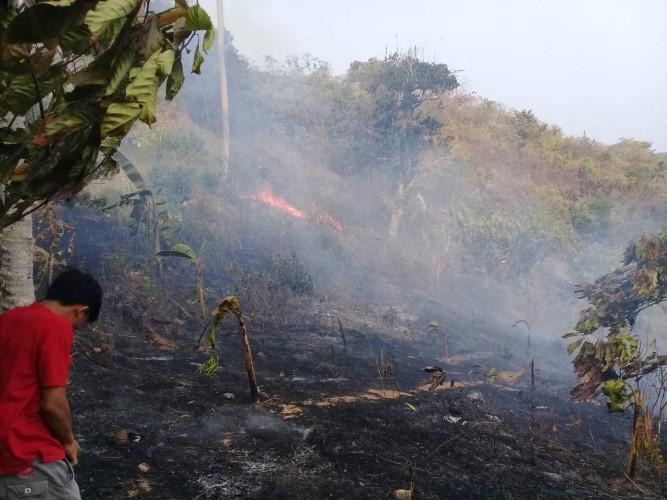 Hutan di Pesawaran Terbakar