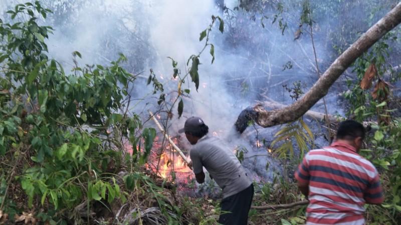 Hutan di Pesisir Barat Terbakar