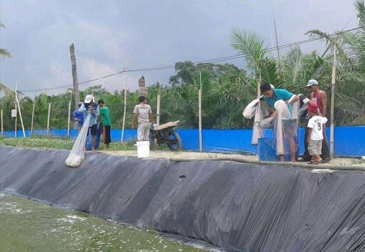 <i>Harga Anjlok Hingga Perbup Sengsarakan Pembudidaya Udang</i>