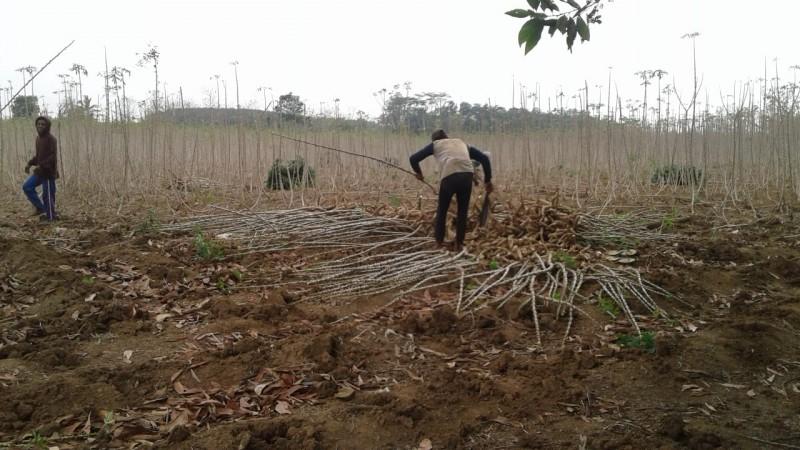 <i>Hujan Asa Petani Singkong Lampura Jelang Masa Tanam<i/>