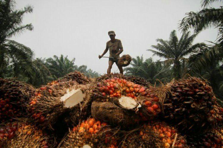 India Serap CPO Lampung