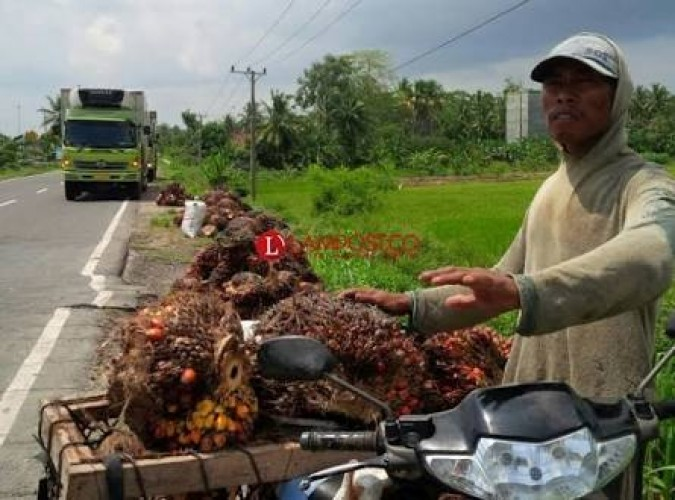 Indonesia Bisa Maksimalkan Produksi Sawit yang Melimpah untuk Energi
