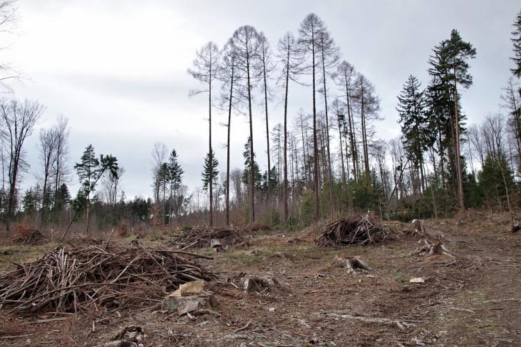 Intimidasi Para Perusak Hutan