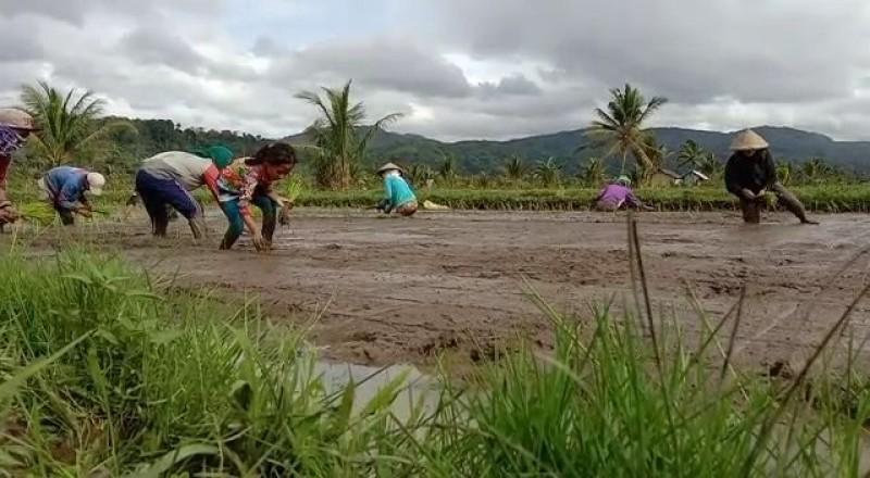 Jalan Rusak Sulitkan Warga Suoh Jual Hasil Pertanian