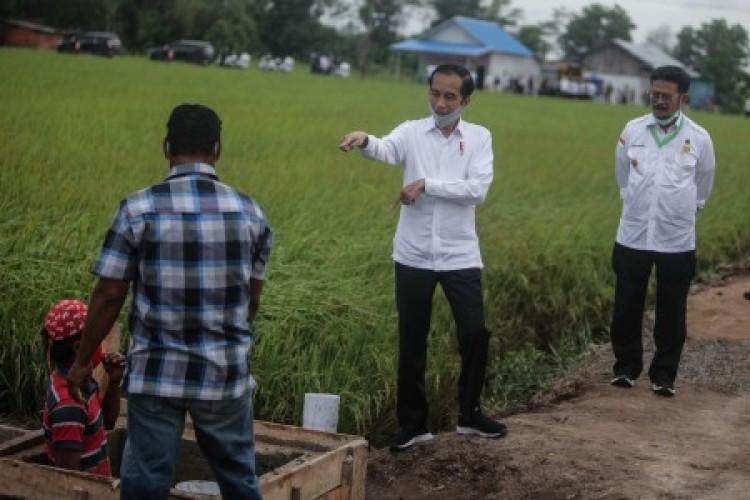 Jokowi Pastikan Tak Impor Beras Hingga Juni 2021