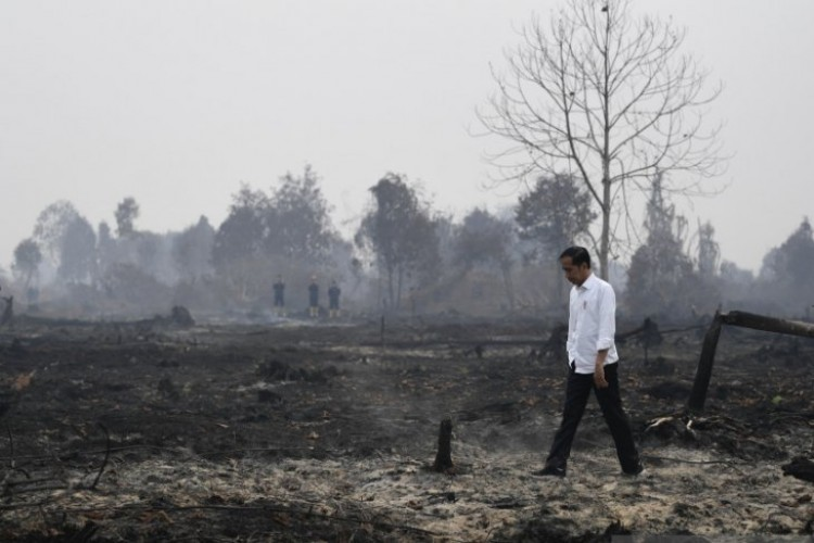 Jokowi: Segala Upaya Sudah Dilakukan Atasi Kebakaran Hutan