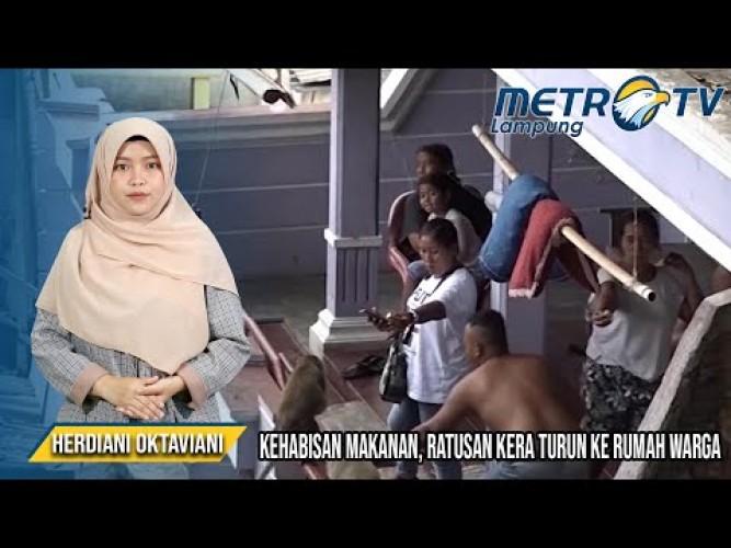 Kawanan Kera dari Gunung Banten Turun ke Permukiman Warga