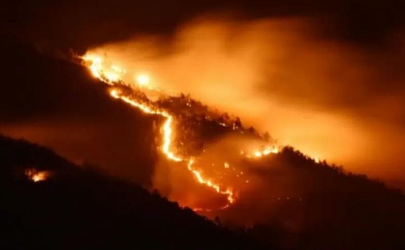 Kebakaran Hutan Selama Kemarau 2019 Capai 2.607 Ha