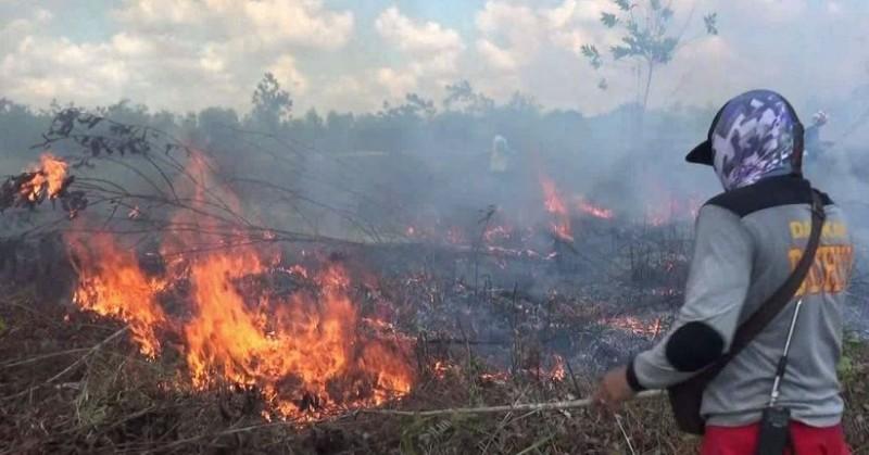 Kebakaran Lahan di Bandar Lampung Mendominasi