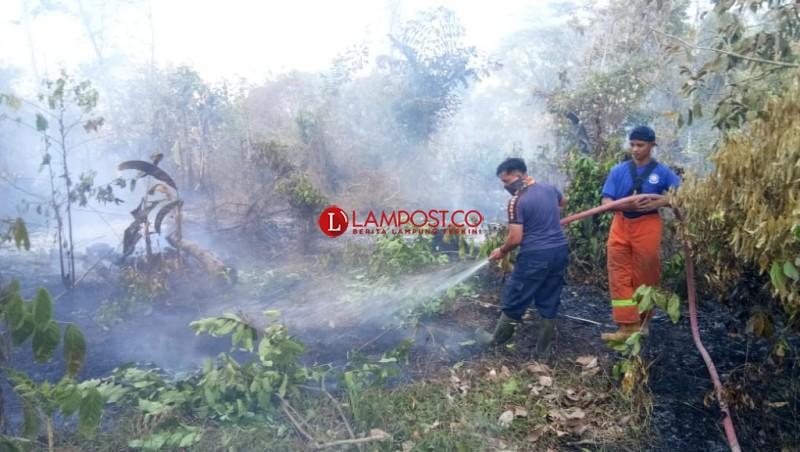 Kebakaran Lahan Kembali Terjadi di Palas